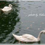 [Diary] 20061011