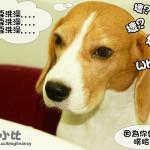 [試用] 3M Pet Care 不流淚配方