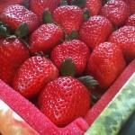 冬天最令人期待的,就是吃草莓。