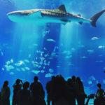 沖繩。美麗海水族館